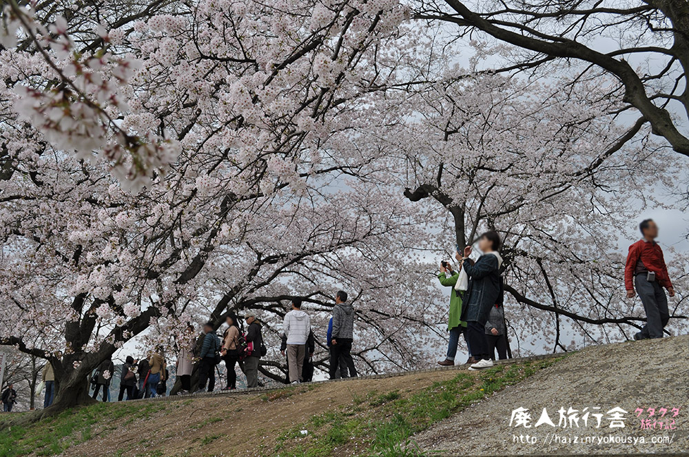 背割堤を一望できる「さくらであい館」の展望塔は高かった(京都)
