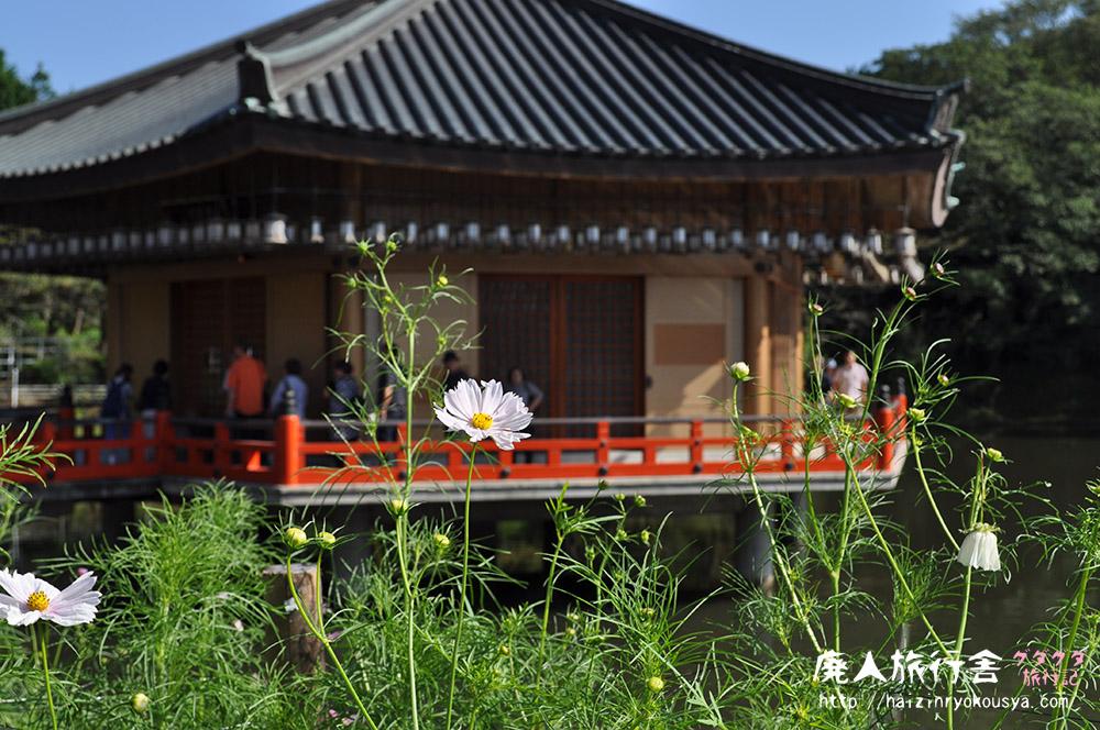 安倍文殊院、国宝・渡海文殊様と秋の風物詩「コスモス迷路」(奈良)