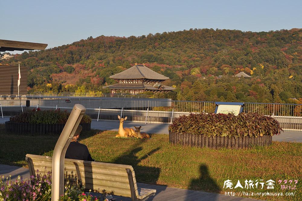 鹿サン(人形)と一緒に奈良県庁の屋上から夕焼けを眺めた話。(奈良)